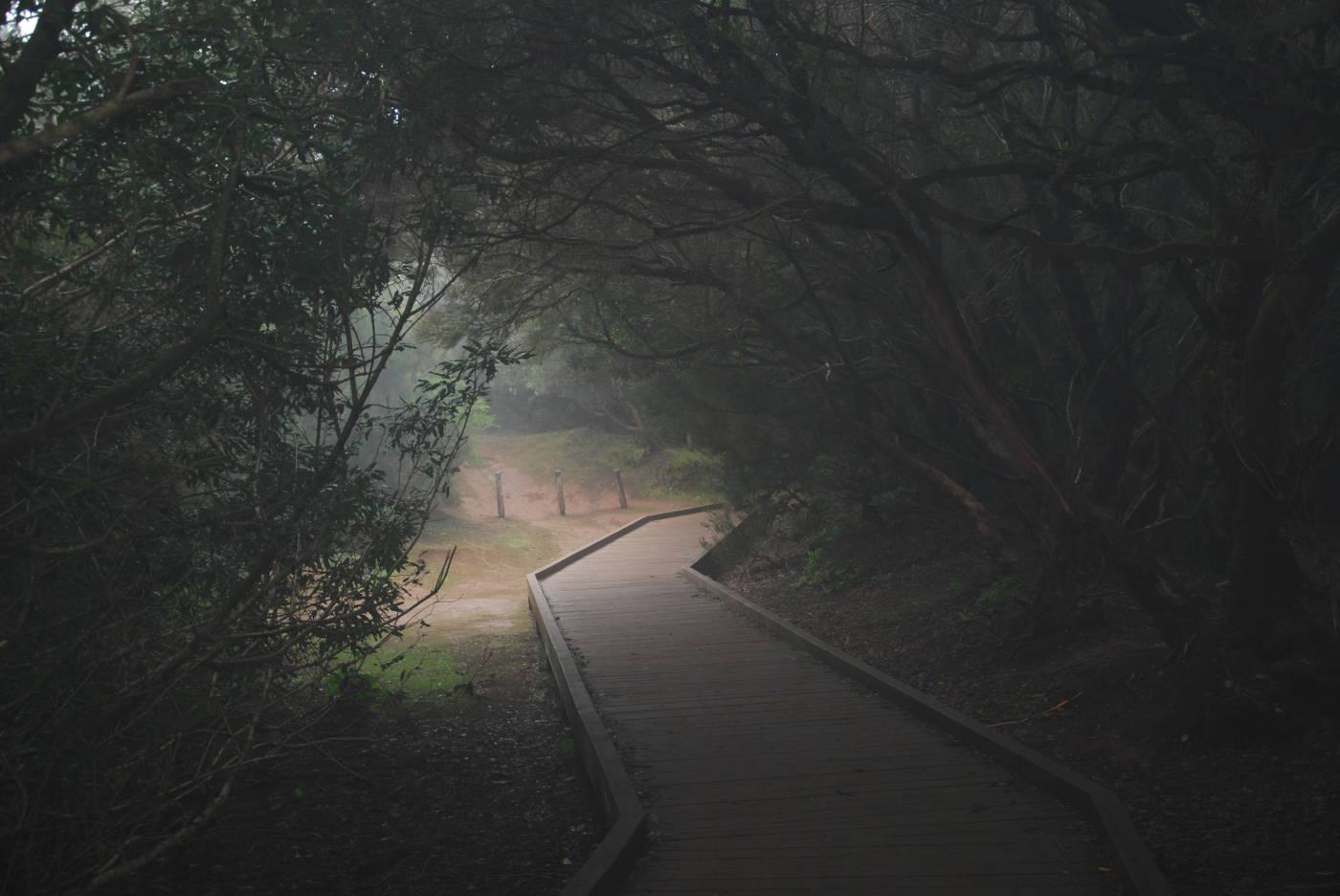 La forêt de Anaga à Tenerife