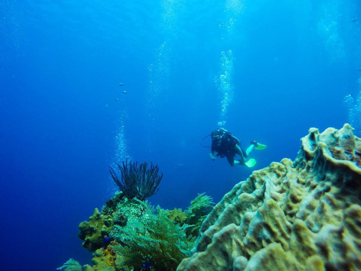 A faire à Amed : plongée sur l'USAT Liberty