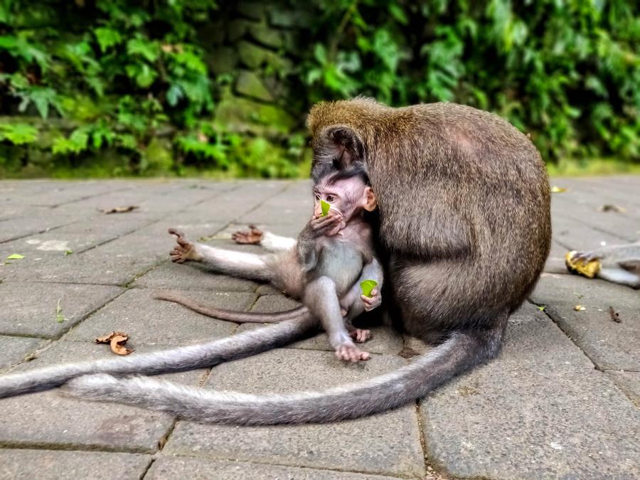 Visiter la forêt des singes à Ubud