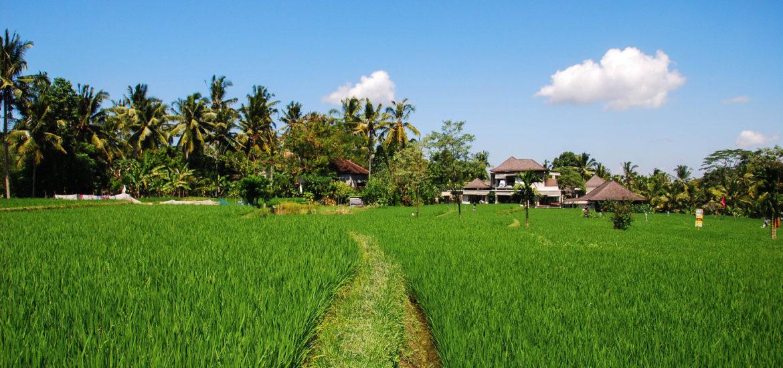 Que faire à Ubud Bali